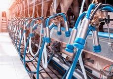 Modern materiaal om koeien op een nieuw landbouwbedrijf, het proces te melken om koeien, industrieel systeem te melken, royalty-vrije stock afbeelding