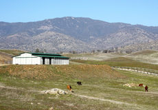 Modern Metal Barn On a Hillside. A modern barn in a peaceful setting on a hill with grazing horses on a beautiful day Stock Photos
