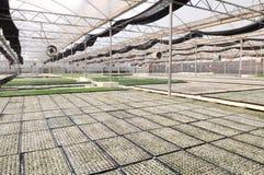 The modern nursery garden green house Stock Photo