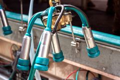 Modern ny utrustning för automatiskt mjölka av kon mjölkar, närbilden, lättheter royaltyfri fotografi