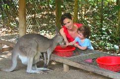 Modern och barnet matar en grå känguru i Queensland Australien royaltyfri bild