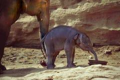 Modern och hon behandla som ett barn elefanten Arkivfoto