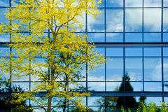 Modern office with autumn tree Stock Photography