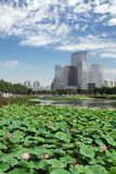 Modern Office Building. A modern office building in Beijing, China Royalty Free Stock Photos