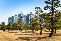 Modern Office Buildings in Tokyo and Clear Sky. Tall Modern Office Buildings with Pine Trees in Foreground in tokyo City Centre on a Sunny Winter Day. Tokyo stock photography