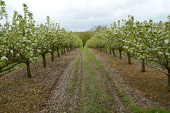Modern Orchards Stock Image