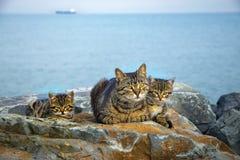 Modern på havet vaggar familjen av katter och kattungar Fotografering för Bildbyråer
