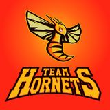 Modern professional logo for sport team. Hornet mascot. Hornets, vector symbol on a light background. Royalty Free Stock Photography