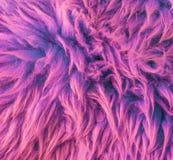 Modern purple colored soft hairy animal skin carpet macro closeup texture background stock image