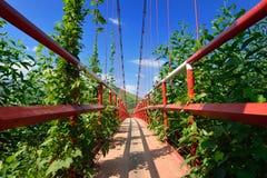 Modern reliable rope suspension bridge. Vietnam Royalty Free Stock Image