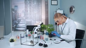 In modern research lab scientist in safety glasses adding liquid to the plant in pot stock footage