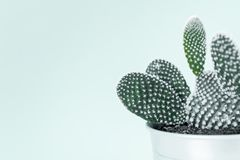 Modern room decoration. Cactus house plant against white wall close up. Cactus. Modern room decoration. Cactus house plant against white wall close up. Cactus royalty free stock photography