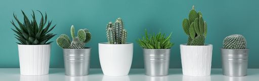 Collection of various potted cactus house plants on white shelf against pastel turquoise colored wall. Cactus plants banner. Modern room decoration. Collection royalty free stock photography