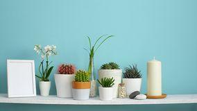 Modern room decoration with frame mockup. White shelf against pastel turquoise wall with Collection of various cactus and succulen. T plants in different pots stock video