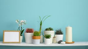 Modern room decoration with frame mockup. White shelf against pastel turquoise wall with collection of various cactus and succulen. T plants in different pots stock video footage