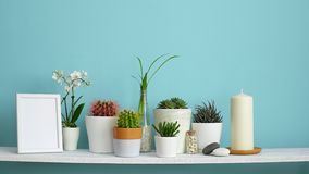 Modern room decoration with frame mockup. White shelf against pastel turquoise wall with Collection of various cactus and succulen stock video footage