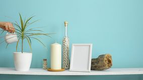 Modern room decoration with Picture frame mockup. White shelf against pastel turquoise wall with Candle and rocks in bottle. Hand. Watering potted dracaena stock video footage
