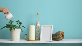 Modern room decoration with picture frame mockup. White shelf against pastel turquoise wall with candle and rocks in bottle. Hand. Watering potted schefflera stock video