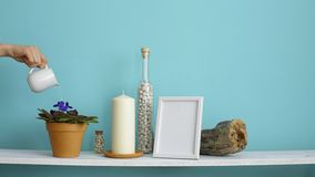Modern room decoration with picture frame mockup. White shelf against pastel turquoise wall with candle and rocks in bottle. Hand. Watering potted violet plant stock video footage