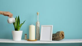 Modern room decoration with picture frame mockup. White shelf against pastel turquoise wall with candle and rocks in bottle. Hand. Watering potted snake plant stock video