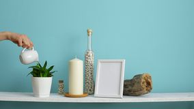 Modern room decoration with picture frame mockup. White shelf against pastel turquoise wall with candle and rocks in bottle. Hand. Watering potted snake plant stock video footage