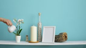 Modern room decoration with Picture frame mockup. White shelf against pastel turquoise wall with Candle and rocks in bottle. Hand. Watering potted orchid plant stock video footage
