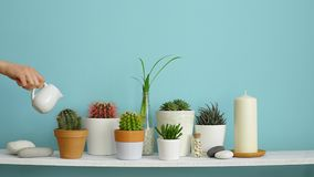 Modern room decoration with Picture frame mockup. White shelf against pastel turquoise wall with Collection of various cactus and. Succulent plants in different stock video footage