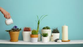 Modern room decoration with picture frame mockup. White shelf against pastel turquoise wall with collection of various cactus and. Succulent plants in different stock footage