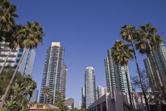 Modern San Diego. Modern towers and tall palm trees in scenic downtown San Diego California Stock Photo