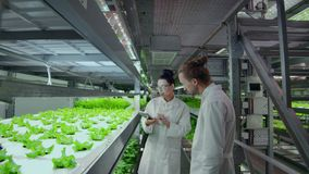 Modern scientists are engaged in genetic engineering in the modern production of vegitarian products. Modern farm for. Automated production of vegetables stock footage
