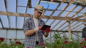 Modern small flower growing business. Colleagues florists work together with tablet computers in a greenhouse. 2 modern stock footage