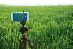 Modern smartphone fixed on fluid tripod are ready to record video in the wheat field. Summer outdoor.  Stock Photography