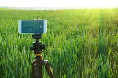 Modern smartphone fixed on fluid tripod are ready to record video in the wheat field. Summer outdoor.  Royalty Free Stock Images