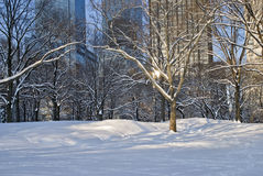 Modern Snow, Central Park Royalty Free Stock Photos