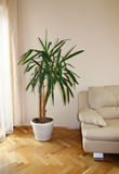 Modern sofa with plant Stock Photography