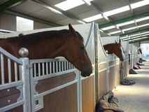 Modern stables. With brown horses stock images