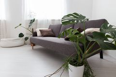 Modern studio apartment with living plants. gray in the interior. sofa in the living room. Royalty Free Stock Photos