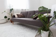 Modern studio apartment with living plants. gray in the interior. sofa in the living room. Royalty Free Stock Photo
