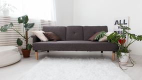 Modern studio apartment with living plants. gray in the interior. sofa in the living room. Stock Photos