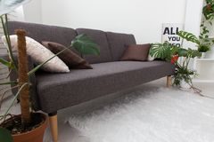 Modern studio apartment with living plants. gray in the interior. sofa in the living room. Stock Images