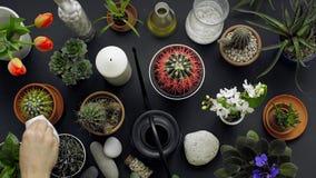 Modern svart tabellgarnering Kaktuns, suckulenta v?xter, tulpan och dekorativt vaggar ovanf?r sikt arkivfilmer