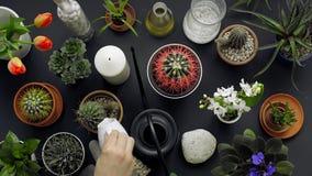 Modern svart tabellgarnering Kaktuns, suckulenta v?xter, tulpan och dekorativt vaggar ovanf?r sikt stock video