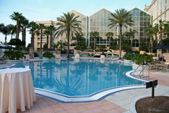 Modern Swimming Pool and Palms. Tropical Palms and Swimming Pool Stock Photography