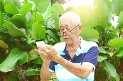Asian senior man Royalty Free Stock Image