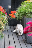 Modern terrace with cat and flowers Royalty Free Stock Photo