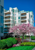 Modern townhouse with blooming cherry in front. Stock Photography