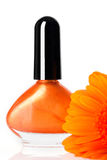 Orange nail polish and Gerber daisy Stock Images