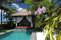 Modern tropical villa with swimming pool. In nature stock images