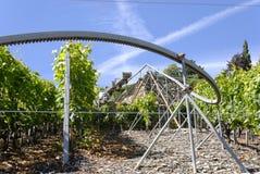 Modern Vineyard Royalty Free Stock Images