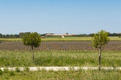Modern Vineyard in Tuscany, Italy Stock Photo